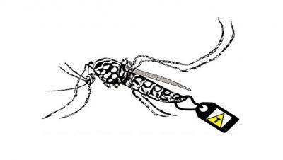 Mosquito transgénico